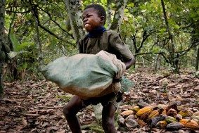 child-labor-cocoa